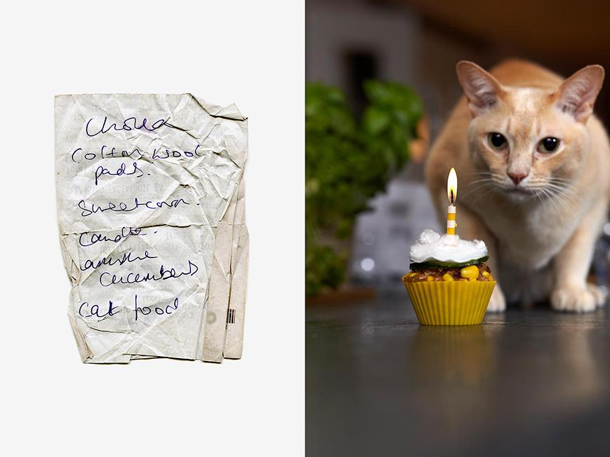CAT FOOD CUPCAKE